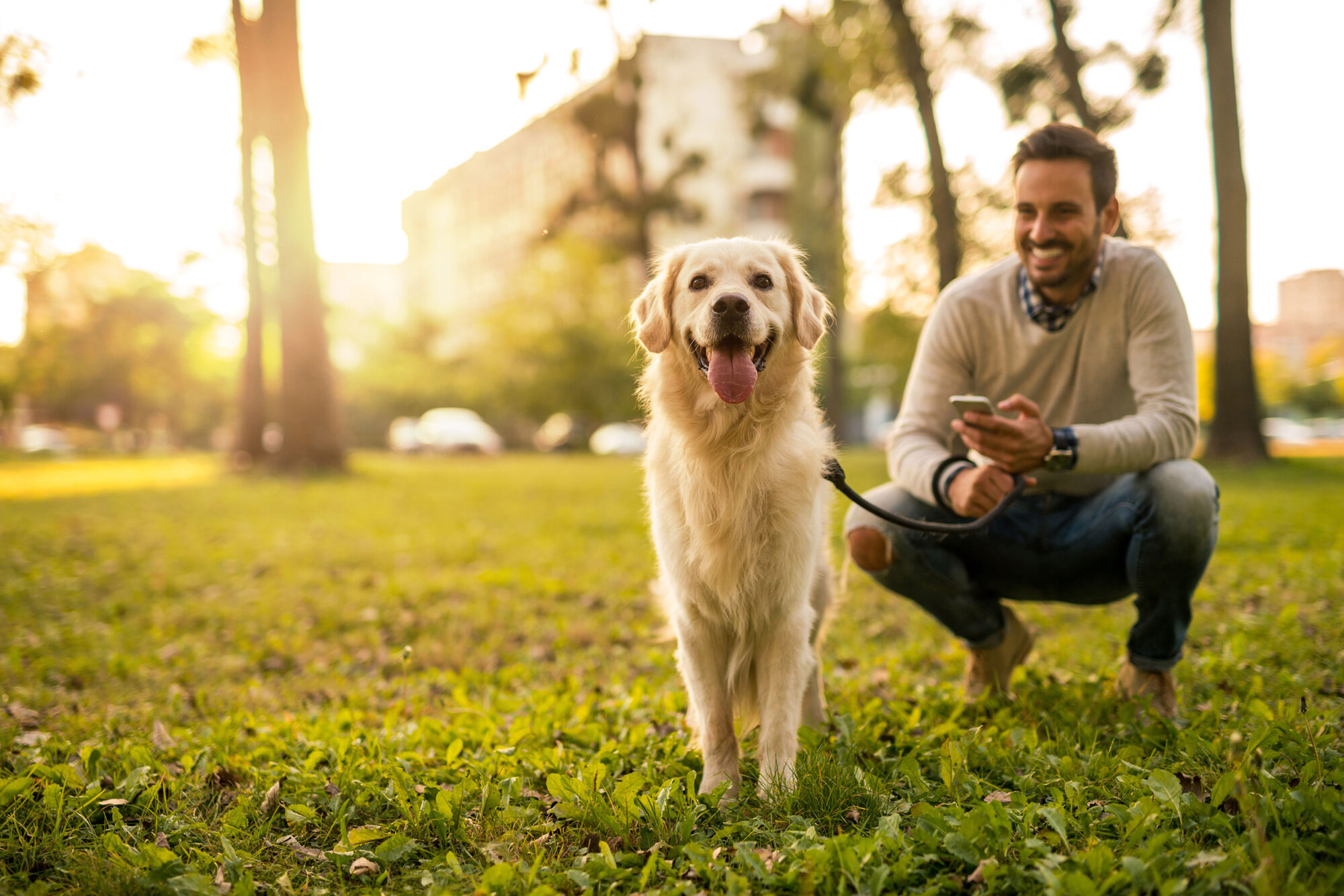 Man with golden retriever at a park in the evening