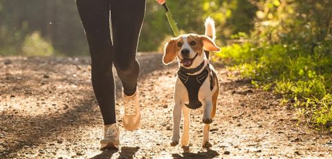 woman running along a dirt trail with her dog