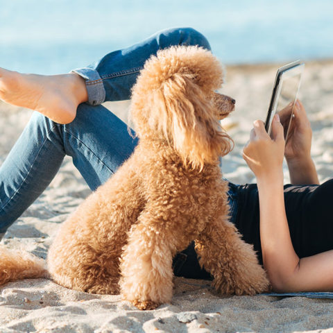 Woman laying on sandy beach with her dog and a tablet