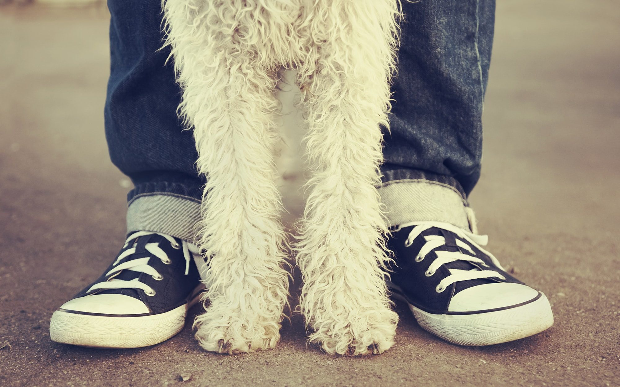 Dog standing between legs of person wearing skate shoes
