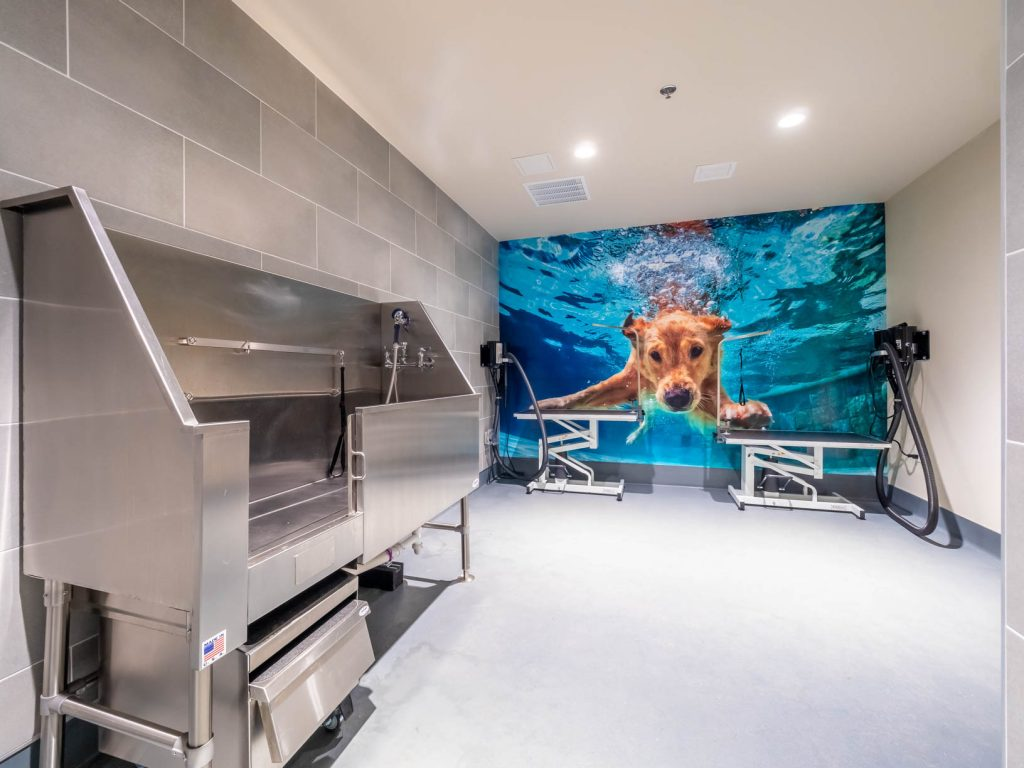 Stainless steel dog wash and adjustable height grooming stations with a wall mural of a swimming dog.